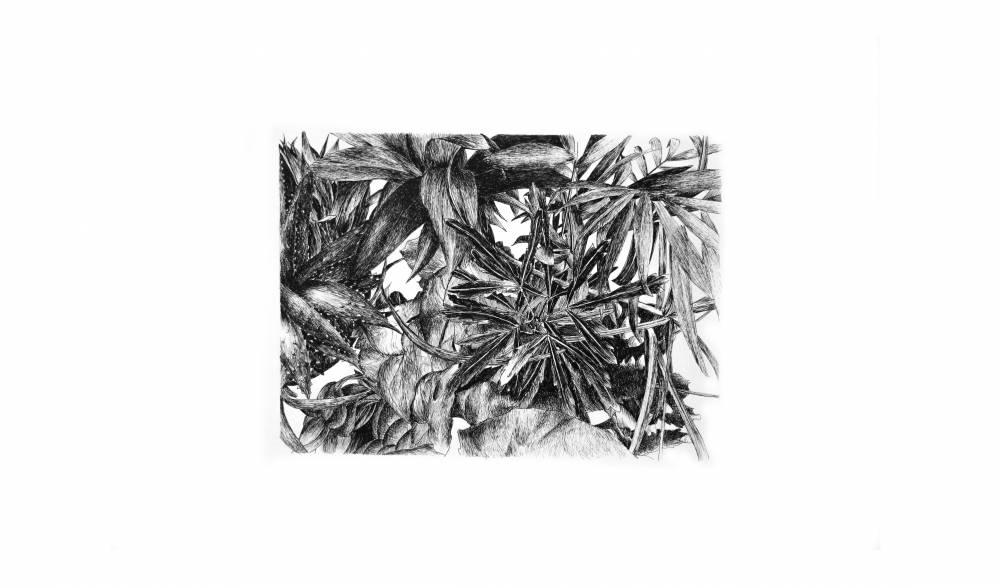 Pauline Martin - Végétation